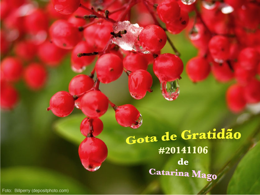 20141106 gograt catarinamago