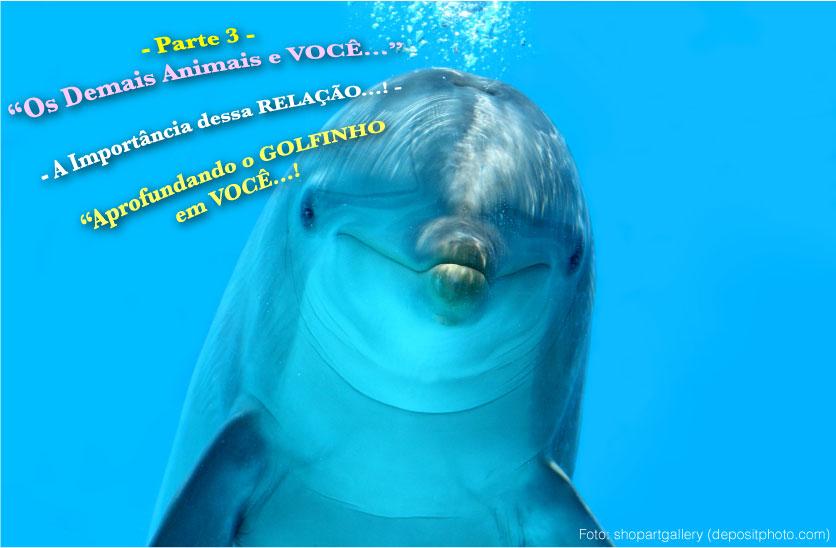 20141108 ik voce e animais parte3 golfinho