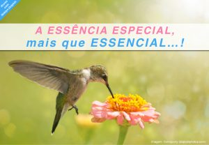 20180804e05 ik essencia especial essencial